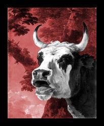 Bellowing ox_Jan Asselijn